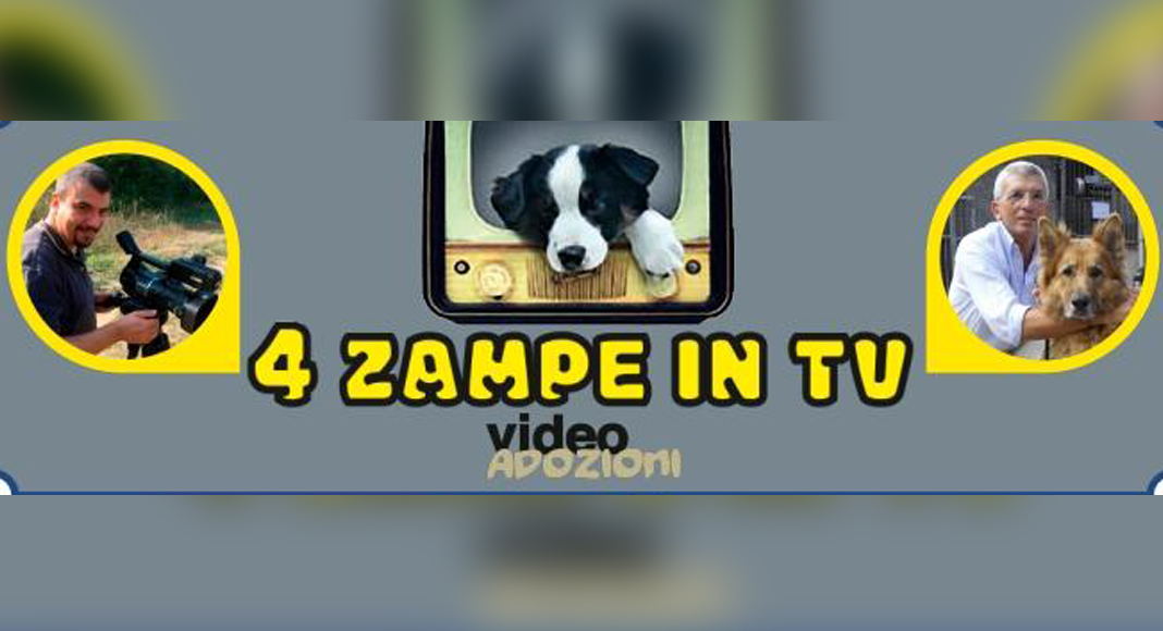 4 ZAMPE IN TV